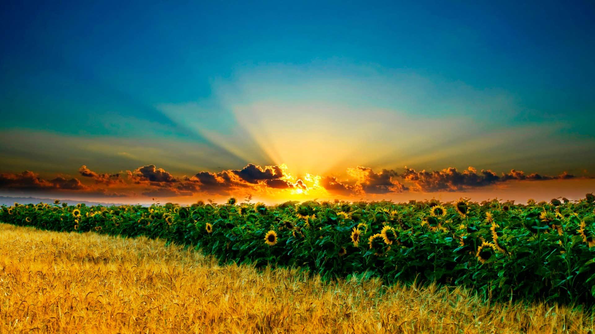 золотое небо обои