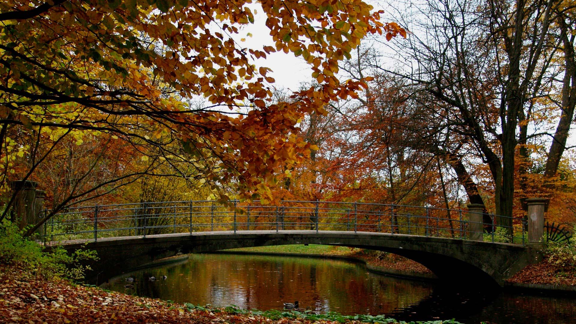 Осень в парке золотая осень в парке
