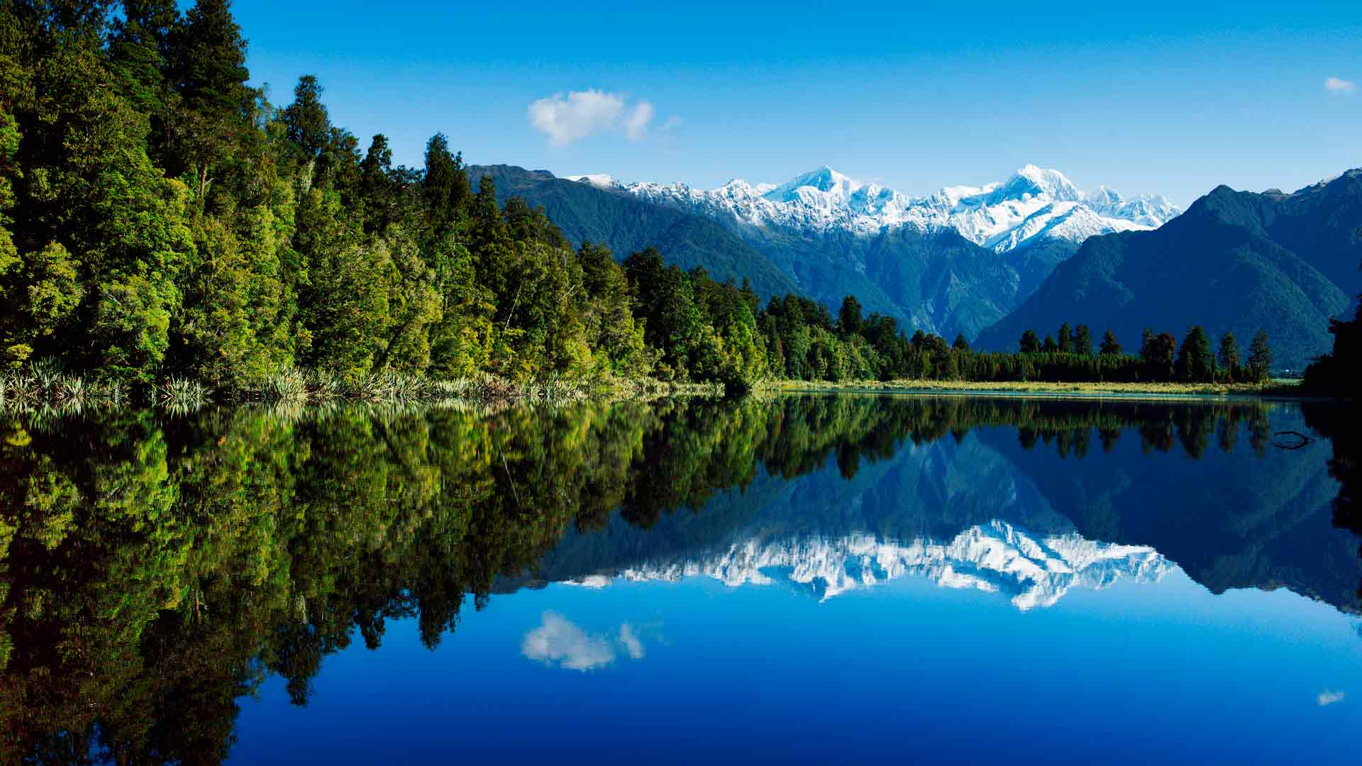 Обои лес у озера зелёный лес
