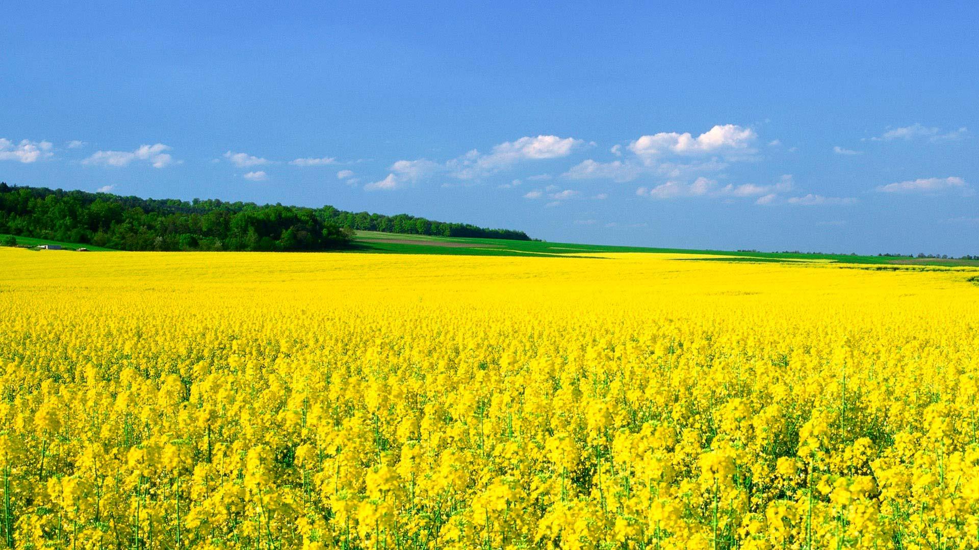 Желтые обои фото