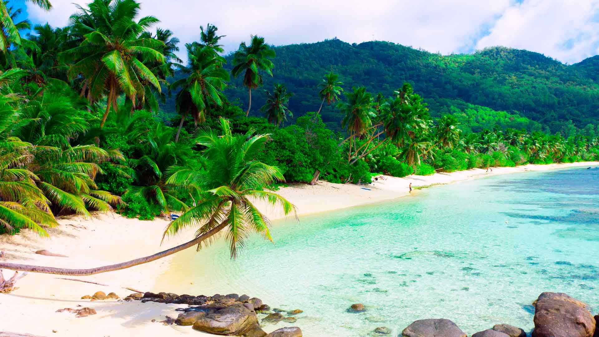 Пляж пальмы океан фото