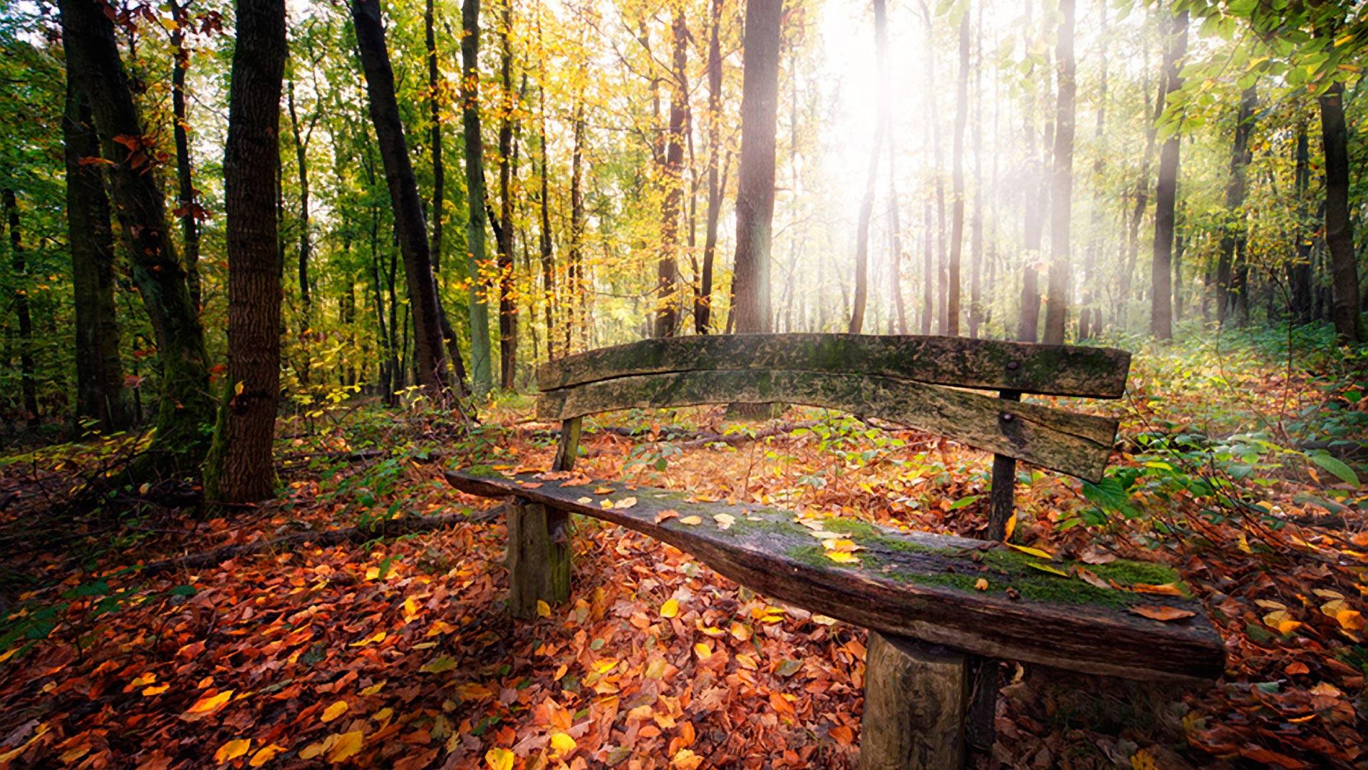 Лес солнечный осенний лес с лавочкой