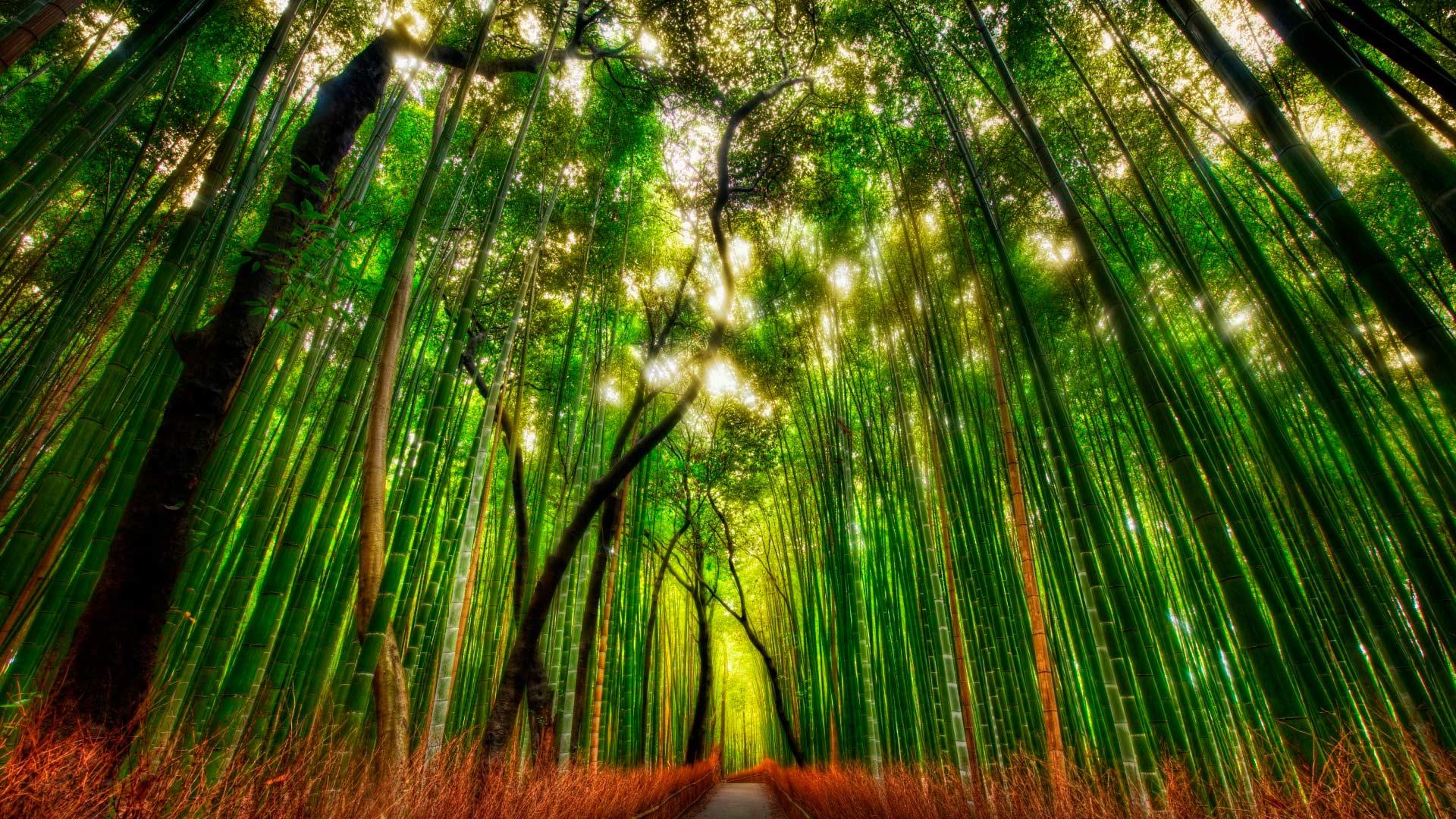 Дорога посреди леса бамбуковый лес
