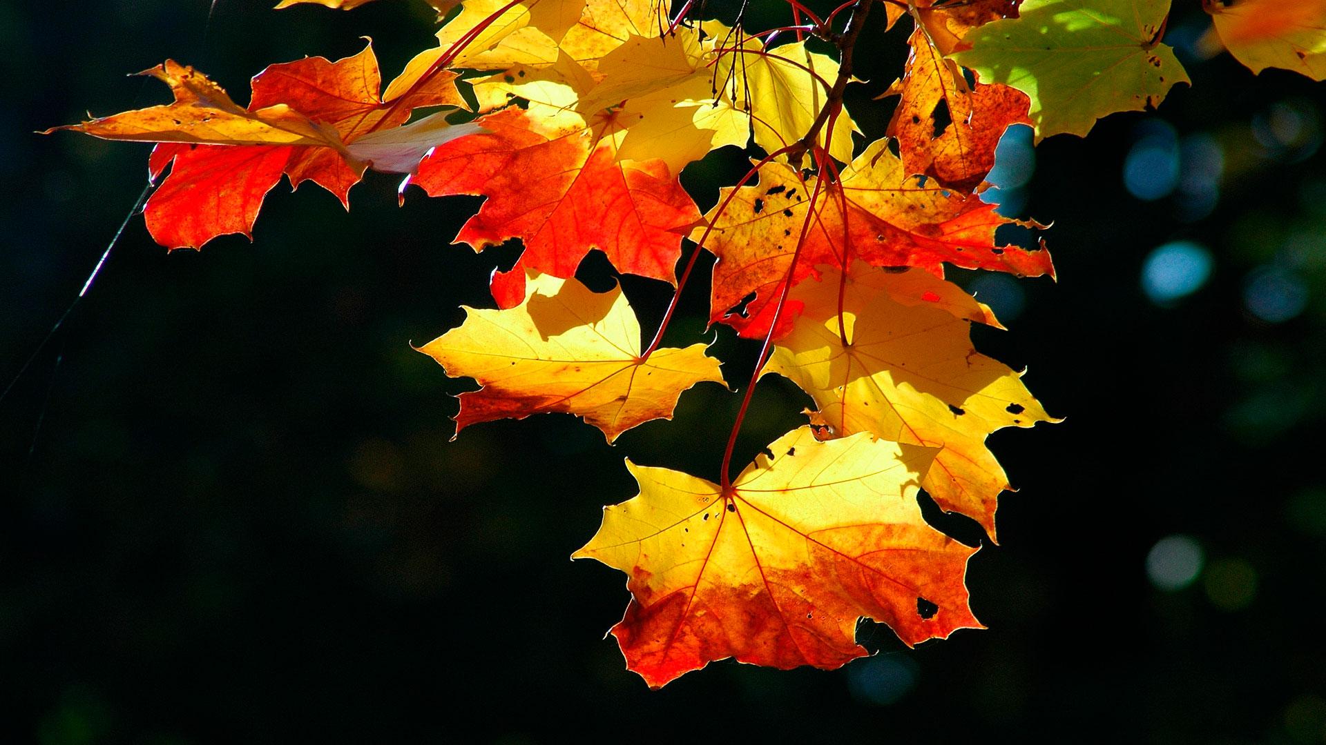 Обои красочные осенние листья