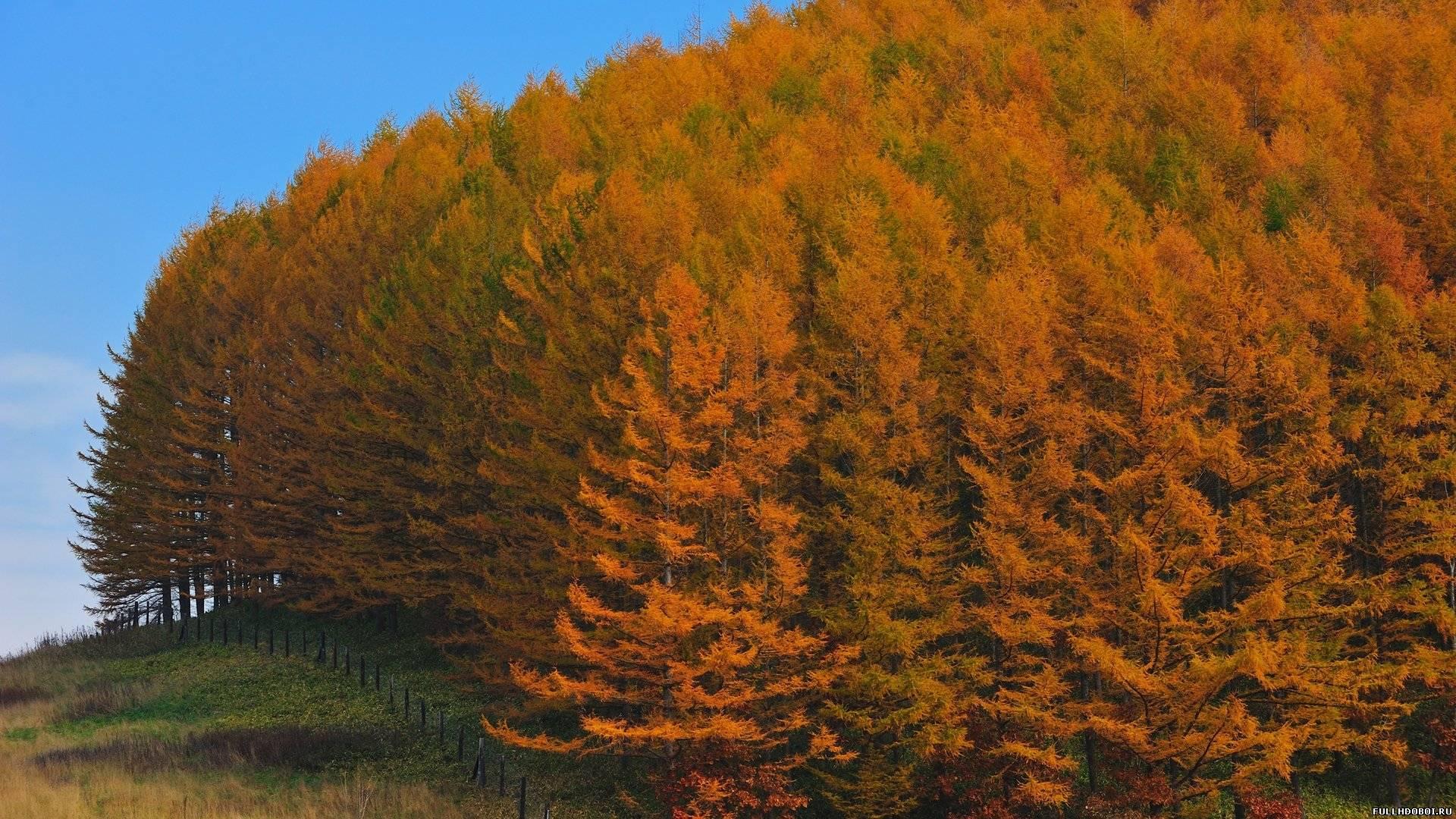 Очень красивый осенний пейзаж в лесу