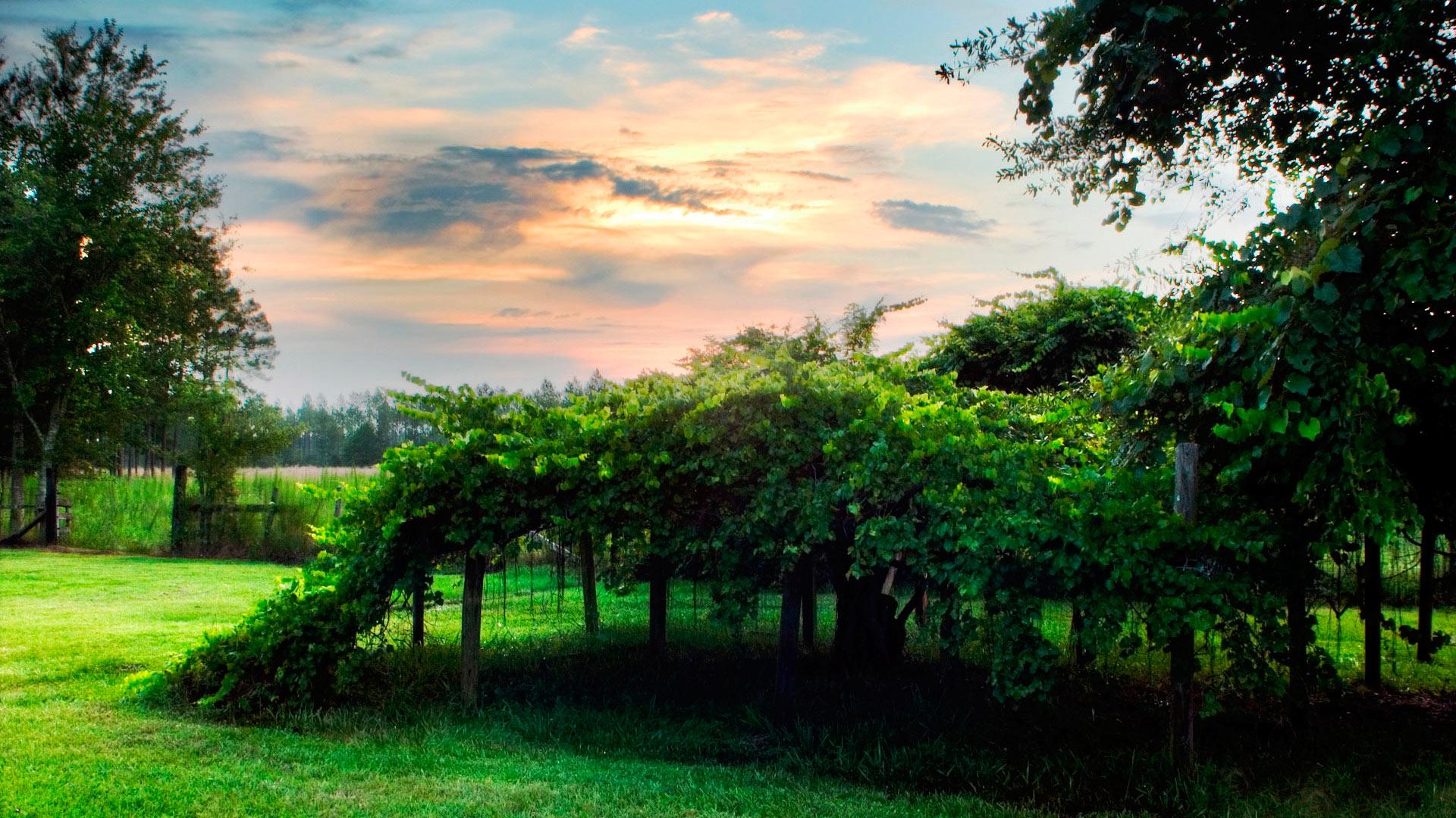 Обои зеленый сад летний зеленый сад