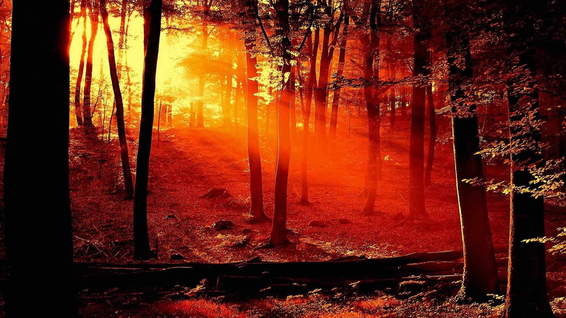 """Предпросмотр схемы вышивки  """"Закатный лес """"."""