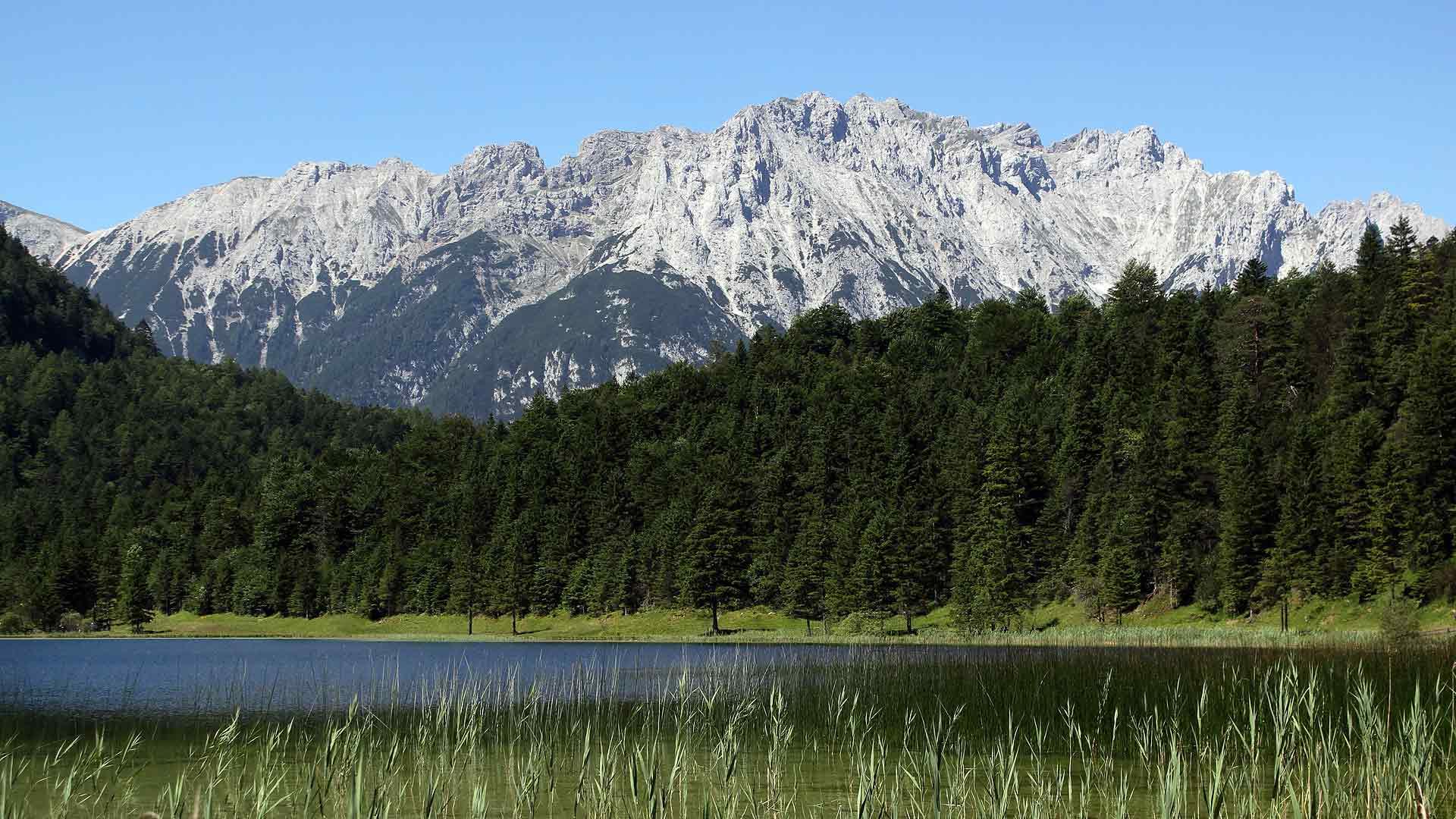 Обои густой лес и горы лес