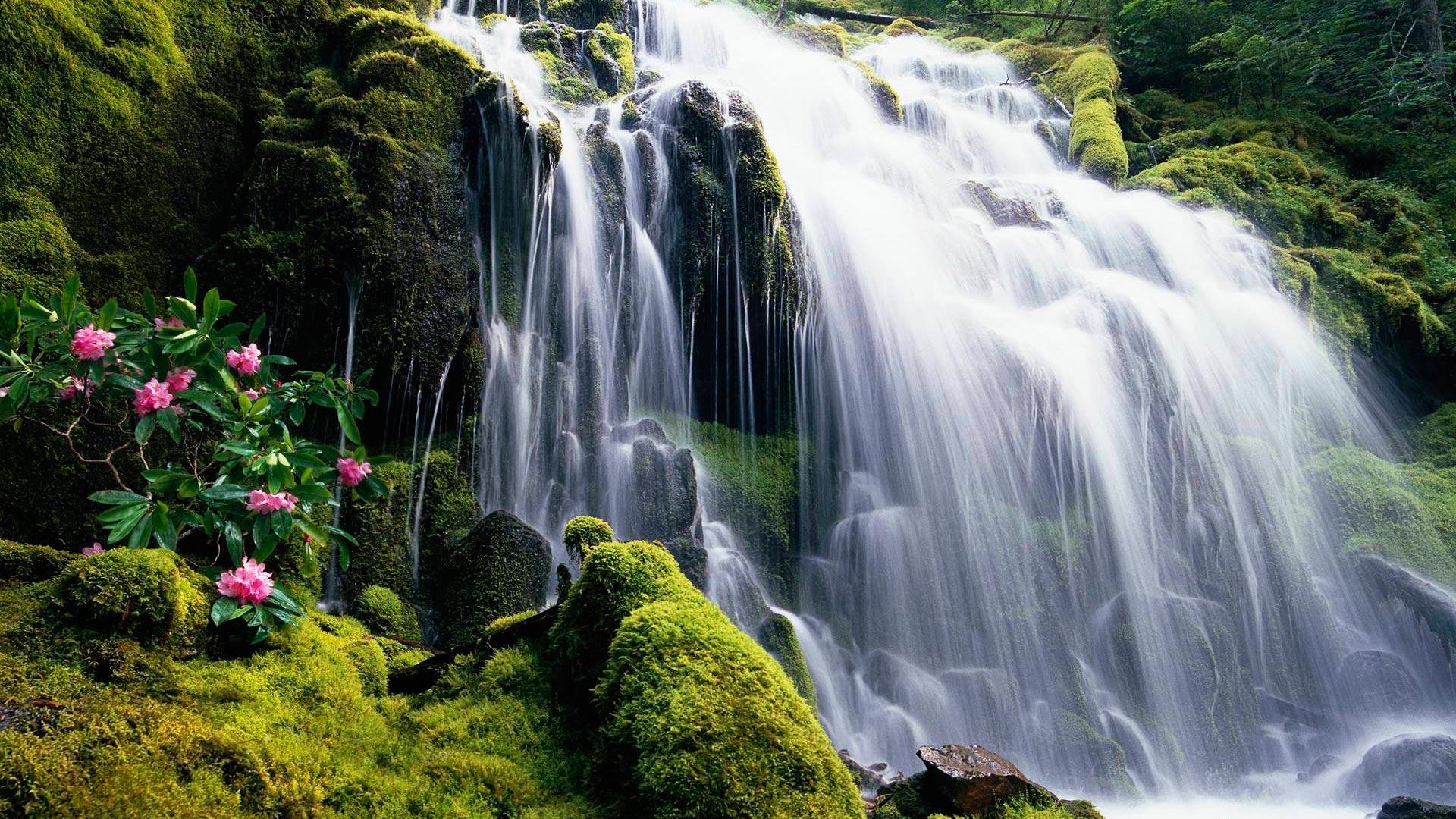 Обои водопад с цветами водопад