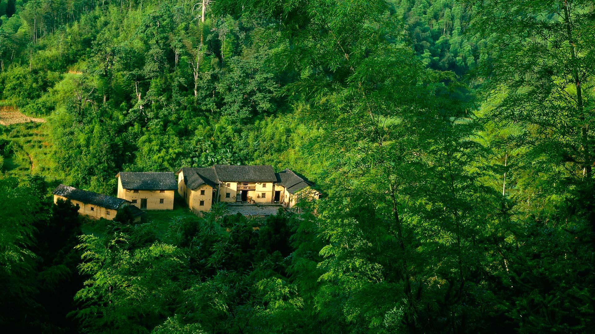 Обои дома в лесу для рабочего стола