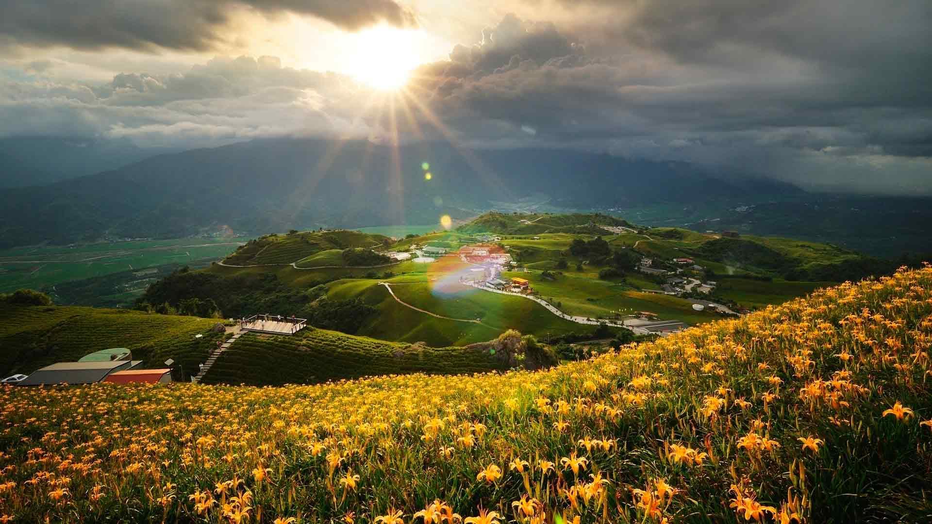 Обои лилии в поле желтые лилии в поле