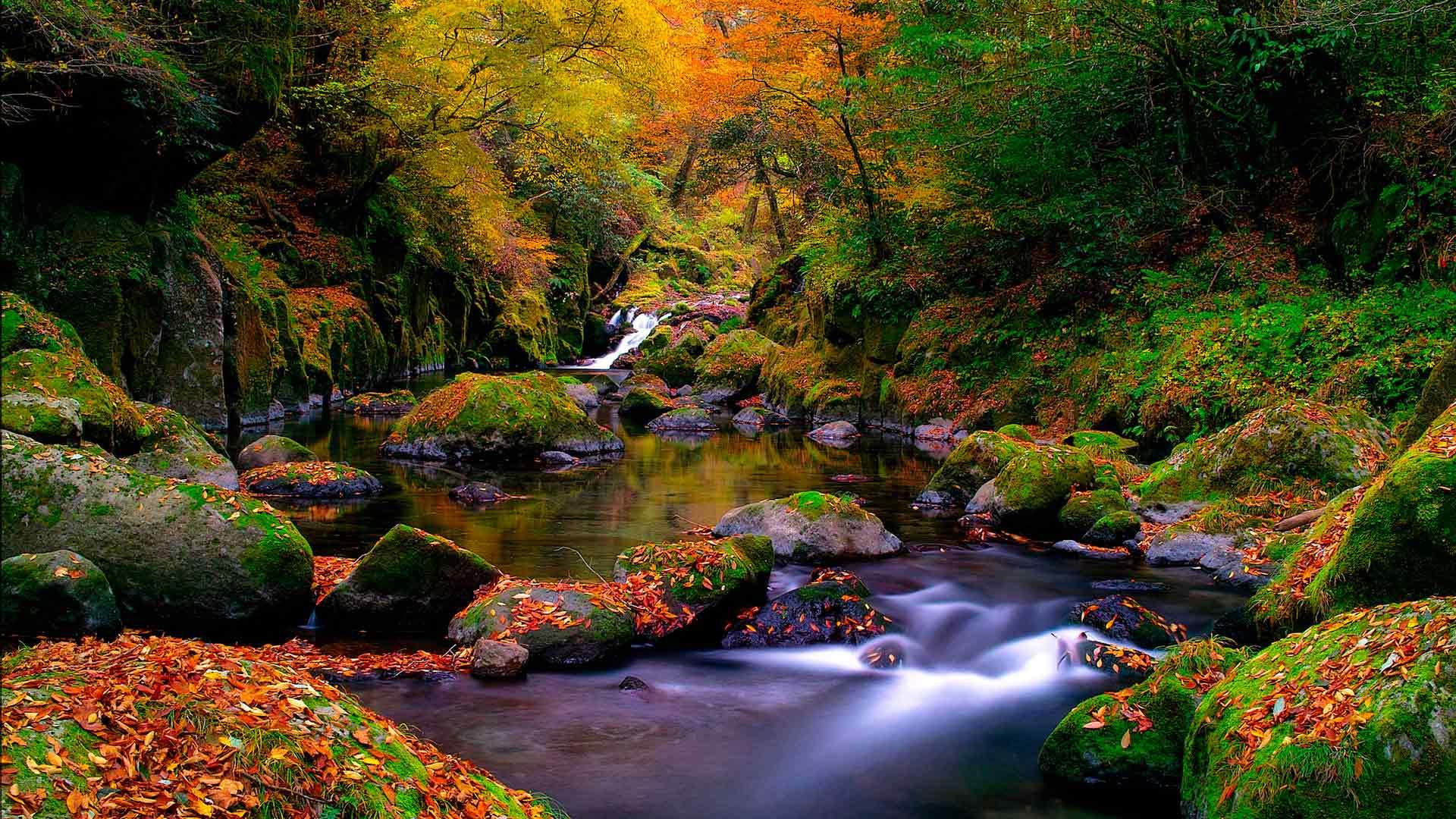 Обои лесной ручей ручей в лесу