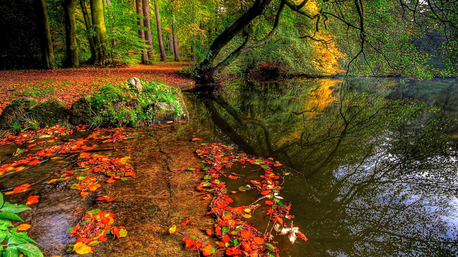 картинки на рабочий стол красивые осень широкоформатные