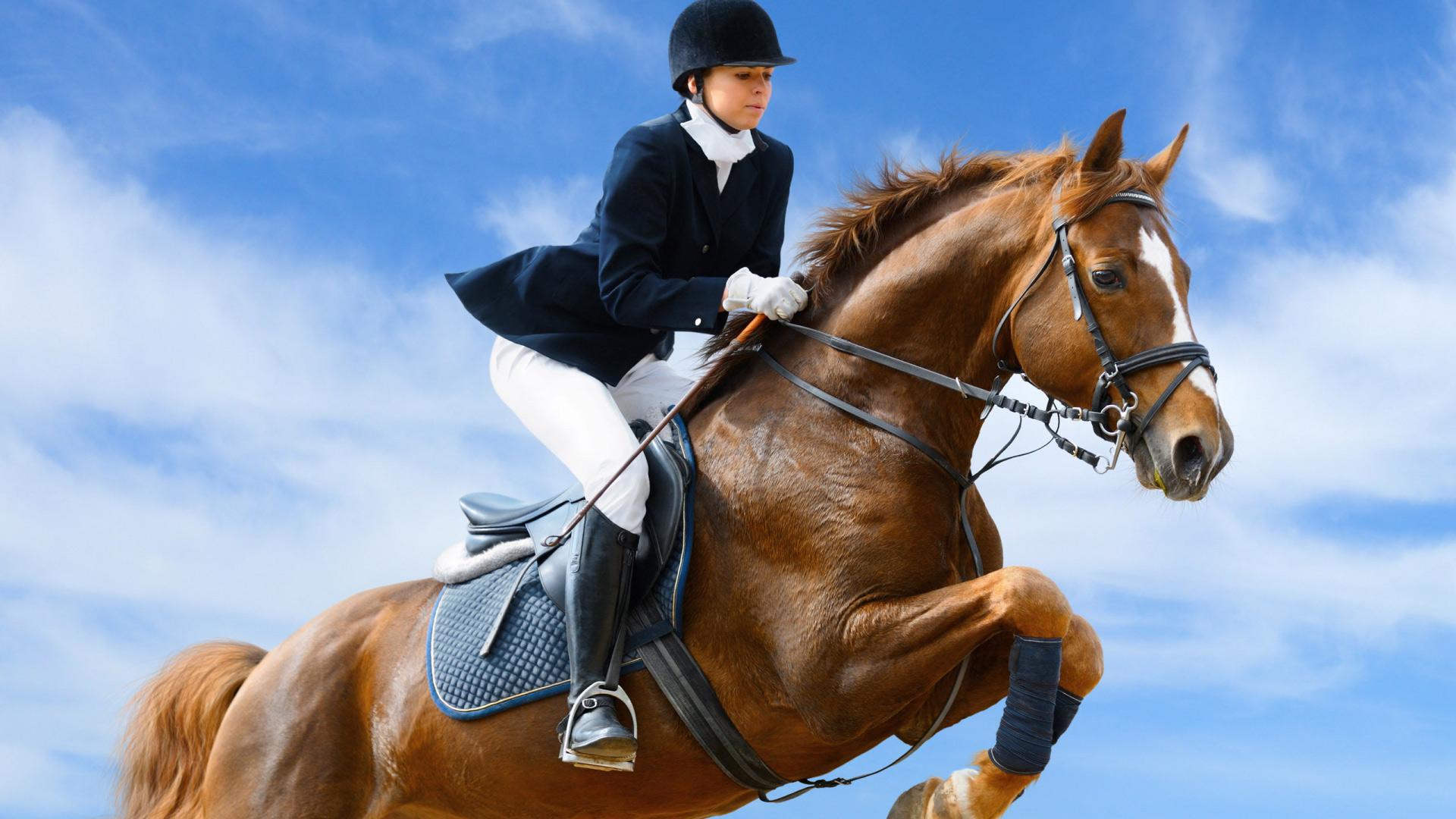 """Предпросмотр схемы вышивки  """"прыжок """". прыжок, конкур, конный спорт, лошади, конь, предпросмотр."""